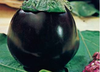 Eggplant Black Beauty Seeds - Royal Seeds - 10g