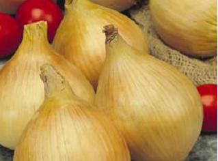 Onion Texas Early Grano Seeds - Royal Seed - 10g