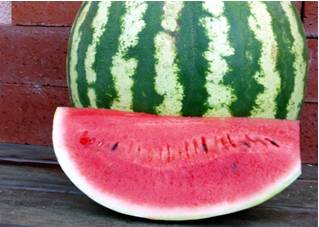 Watermelon Crimson Sweet Seeds - Royal Seeds - 10g
