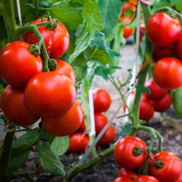 15 Easiest Vegetables to Grow in container