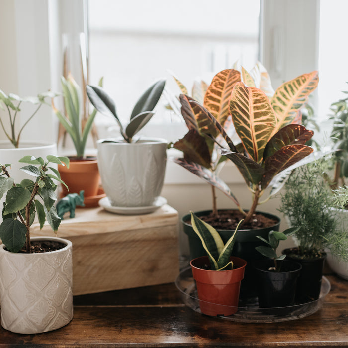 Why Indoor Plants Make You Feel Better?