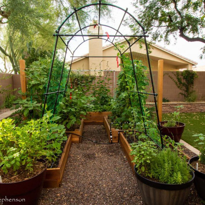 Tips to try your hands at gardening this monsoon - Nurserylive