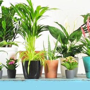 28 best air purifying plants according to NASA - Nurserylive