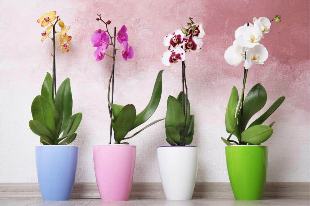 Top 10 Flowering Orchids To Bloom In Your Abode