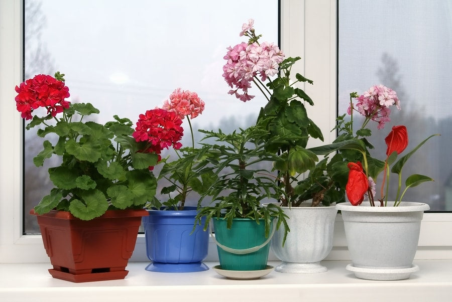Monsoon- The best time to grow these 5 flowering plants