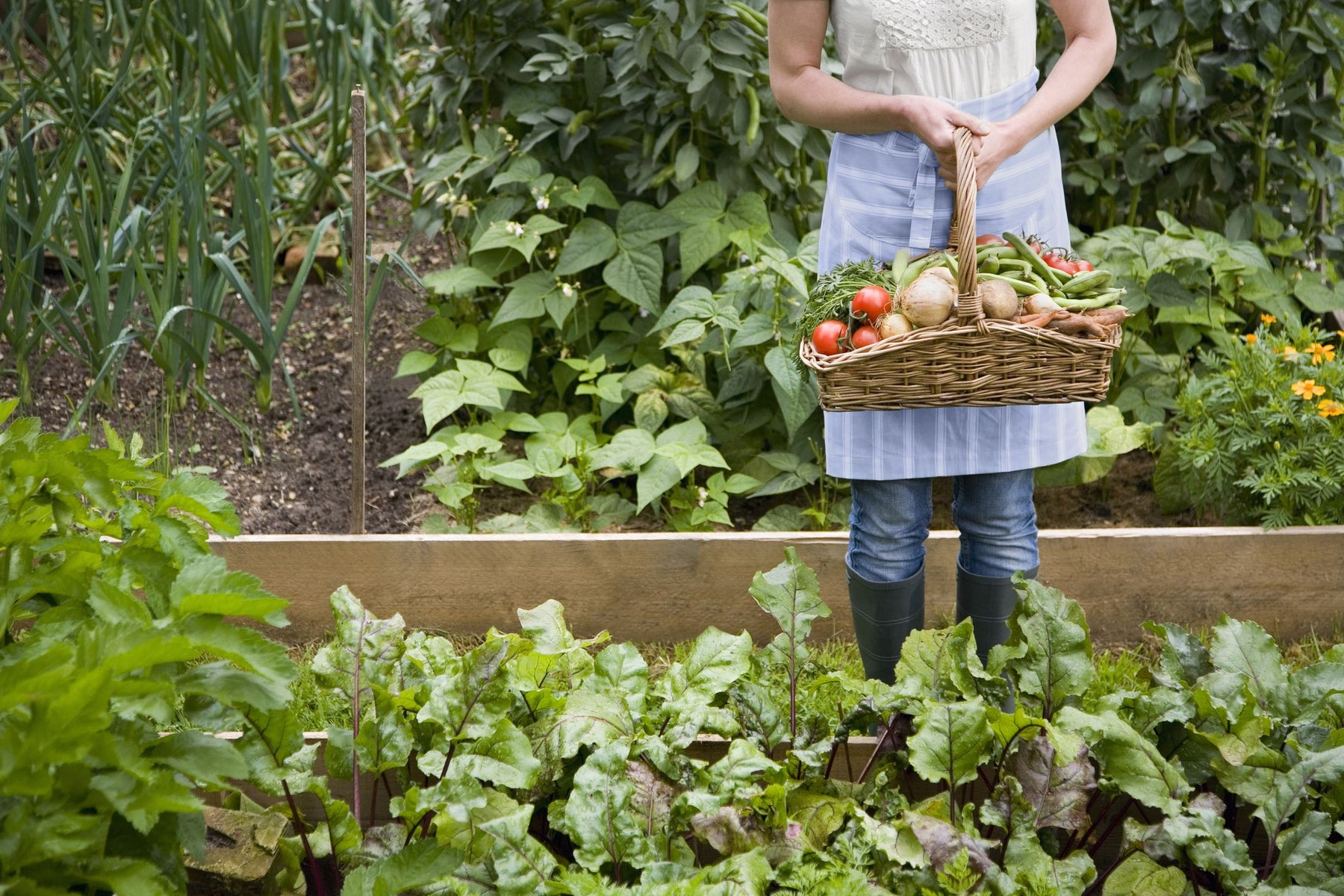 Can you grow vegetables in the shade ? Yes, Here are 32 veggies. - Nurserylive