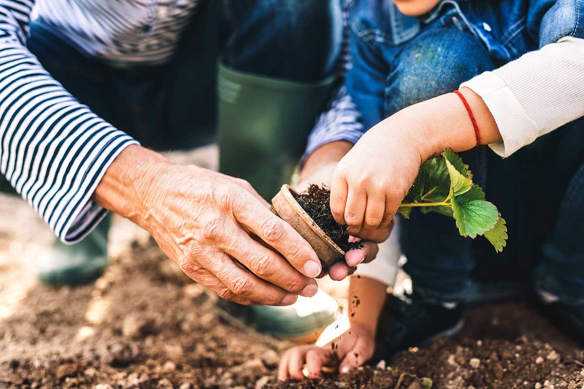 Gardening adds years to your life and life to your years - Nurserylive