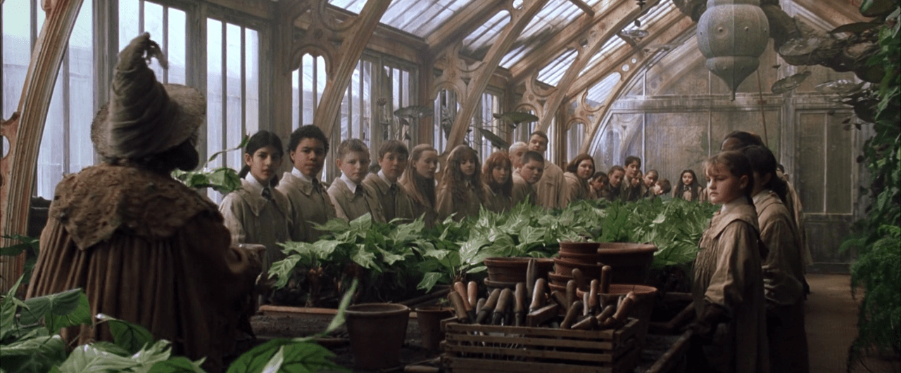 Herbology 101 – 5 enchanting plants from the Wizarding World of Harry Potter - Nurserylive
