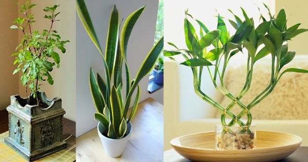 Buying These 8 Plants Will Improve Your Home's Vastu