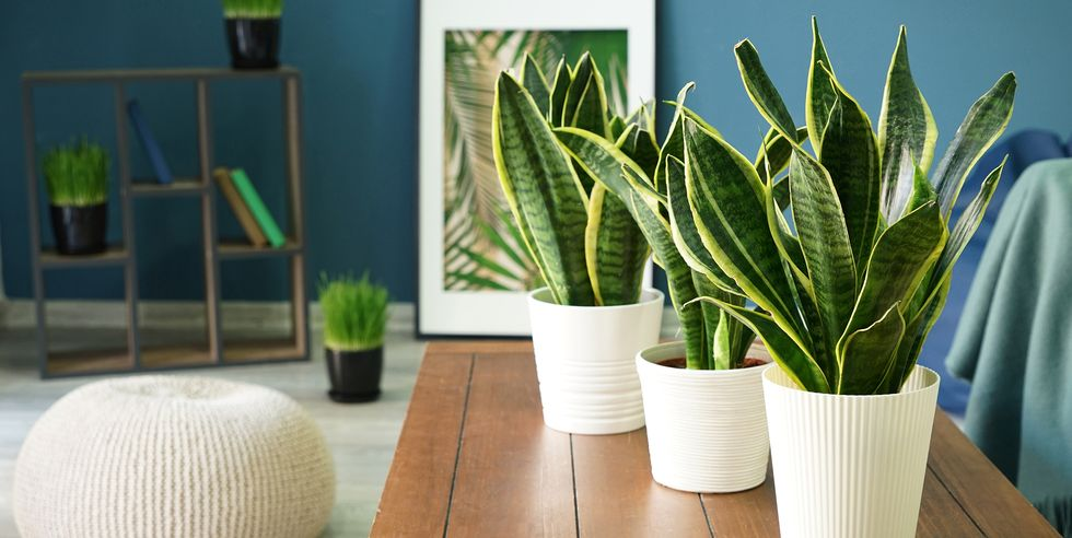 Top 10 Air Purifying Plants To Keep Your Air Clean