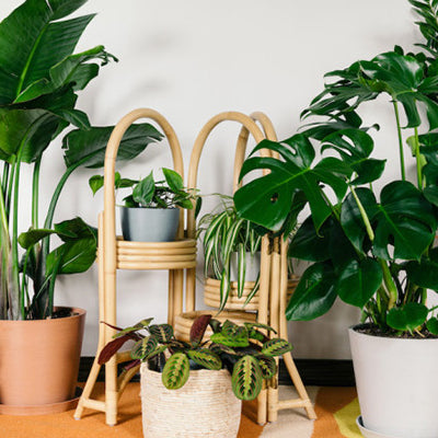 The must follow 'Plant Care Guide' for your green buddies