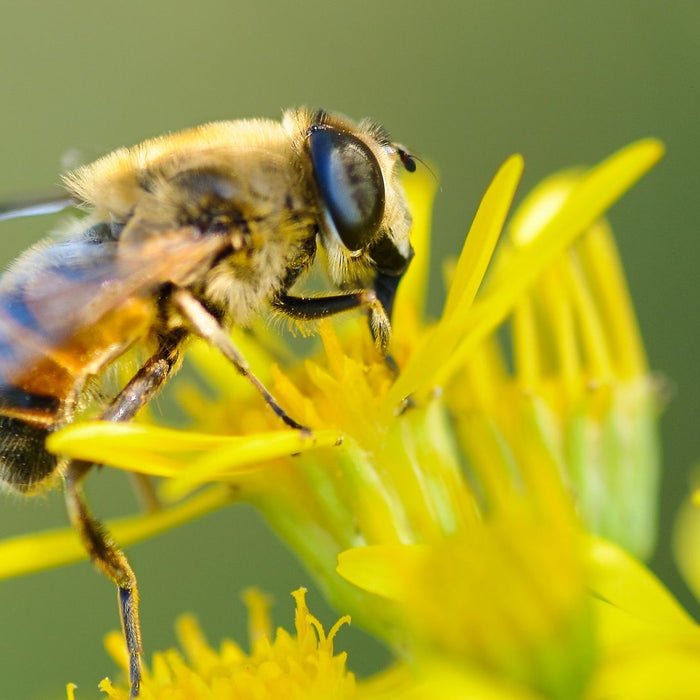 This is how you can save the bees that feed the world - Nurserylive