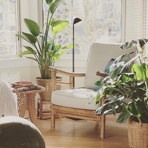 These 7 Plants In Your Bedroom Will Help You Sleep Better! - Nurserylive