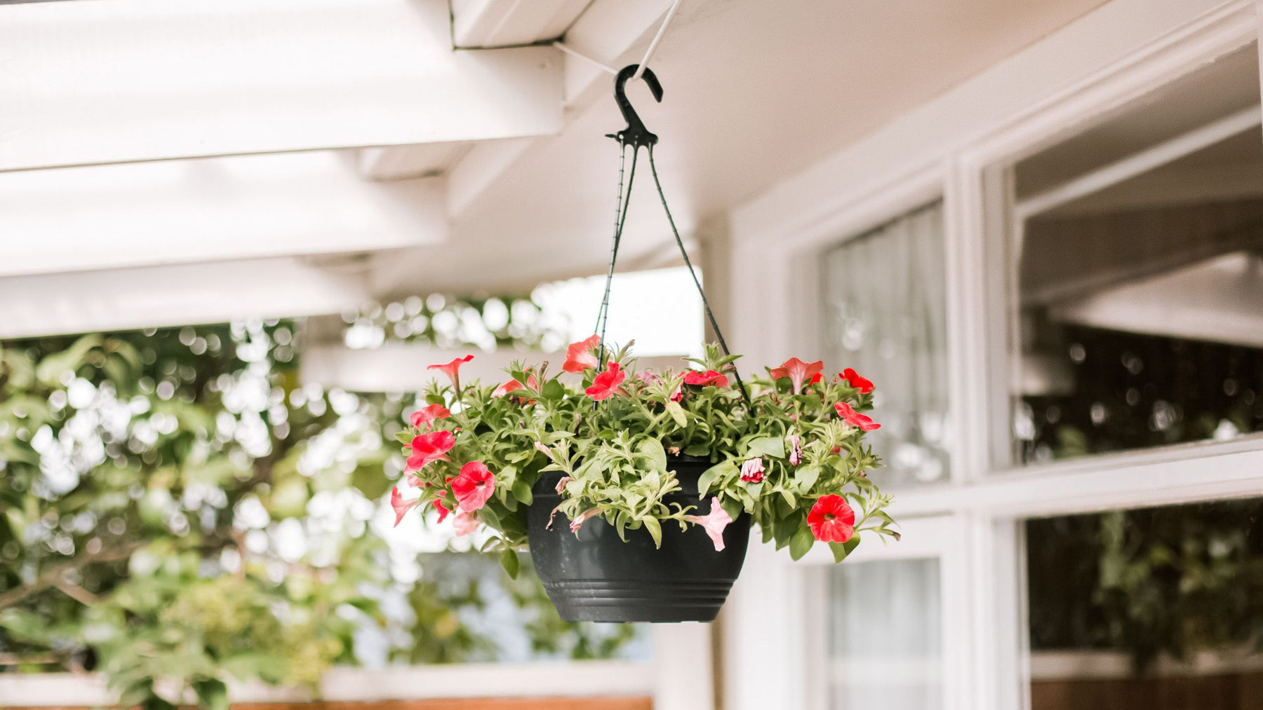Top 10 Plants For Hanging Basket to Decorate Your Home