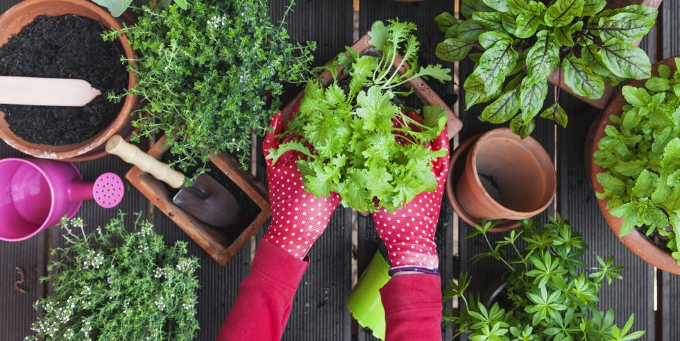 Why You Must Build Your Very Own Home Garden?