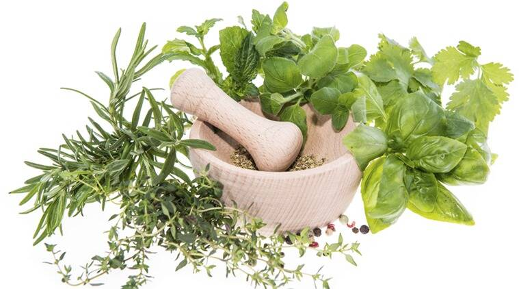 Top 10 Medicinal Plants For Your Herb Garden