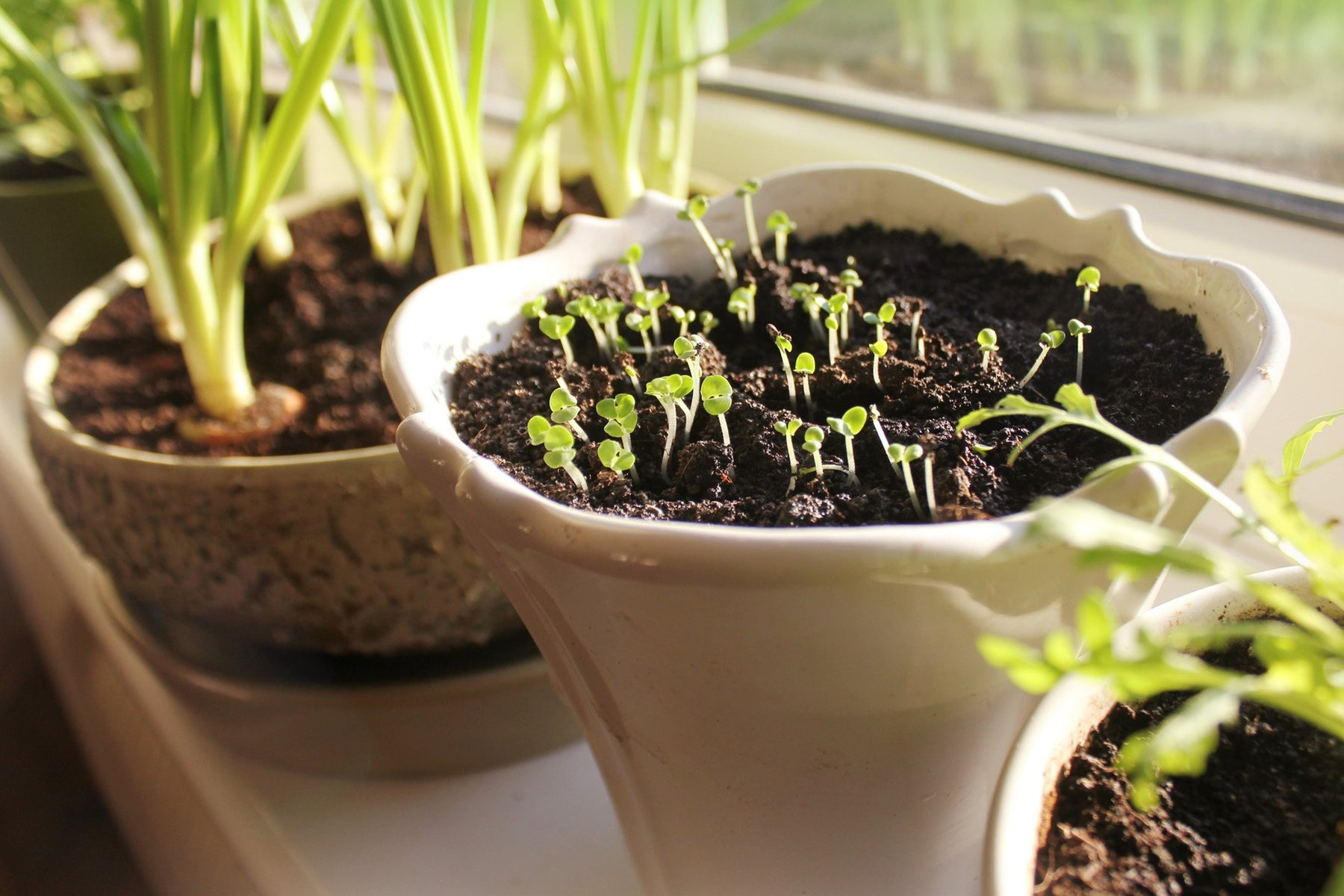 Quarantine vBlog : Regrowing food from your own kitchen? - Nurserylive