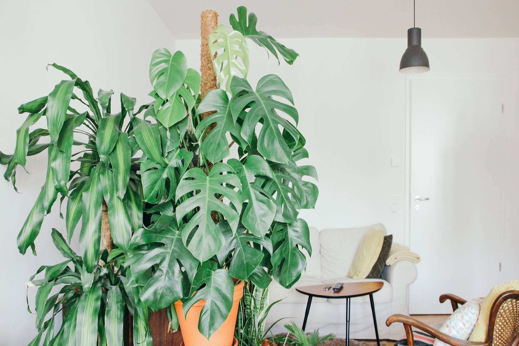 The Power of Positivity - Why Plants Are A Perfect Fit For The Workplace (2/2) - Nurserylive