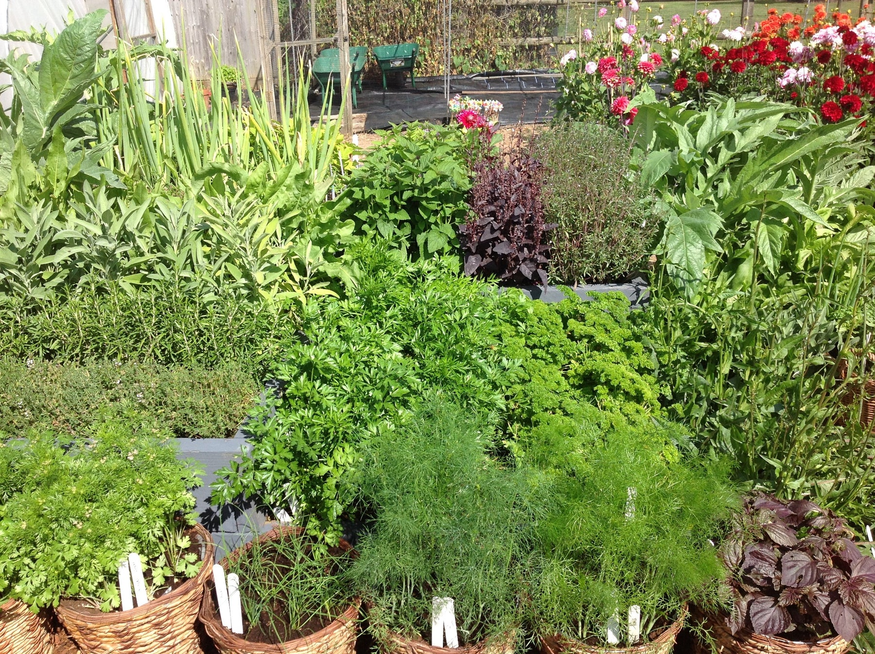 Healthy herbs for refreshing monsoon garden - Nurserylive