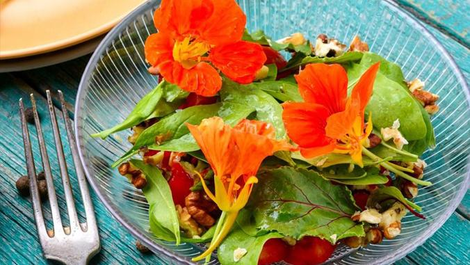 Did you know these 25 flowers can be eaten as food? - Nurserylive