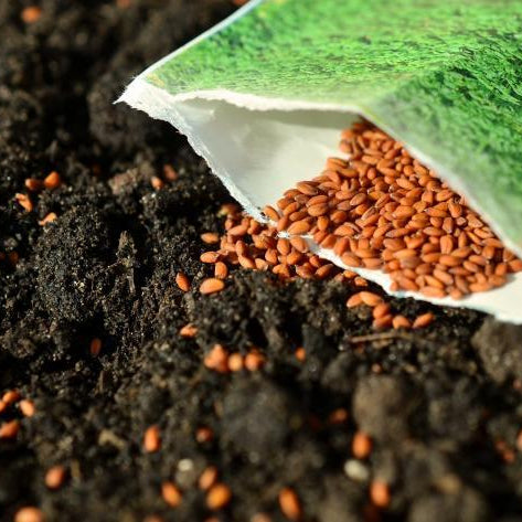 Seed gardening tips for growing vegetables at home - Nurserylive