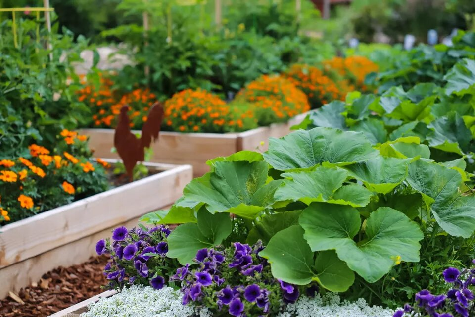 Your Most Common Gardening Queries Answered