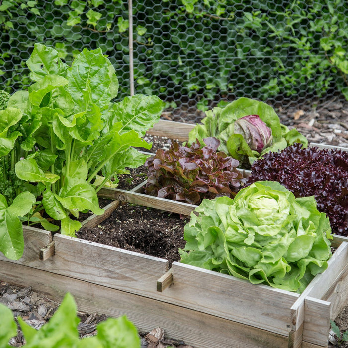 This monsoon try your hand at Vegetable gardening! - Nurserylive