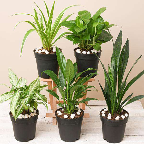 Indoor Plants Packs