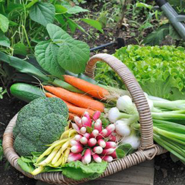 Salads Cuisine Vegetable Herb Seeds