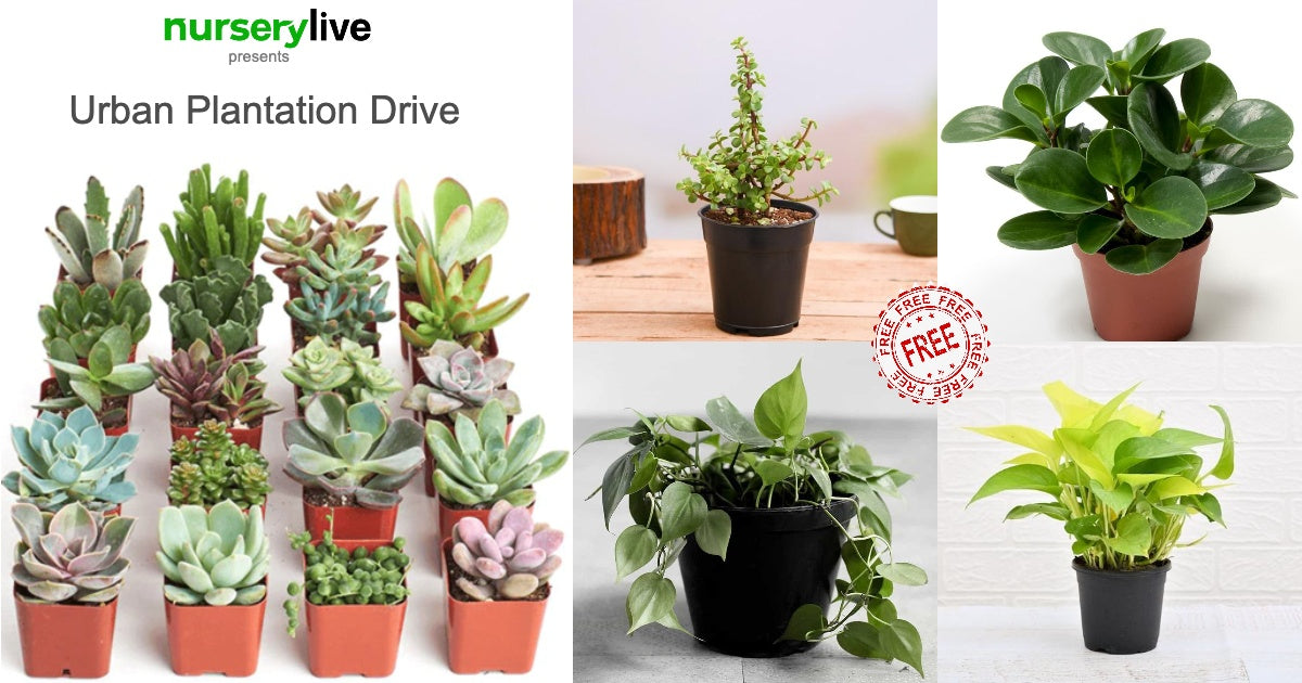 Get Free Plants Today.
