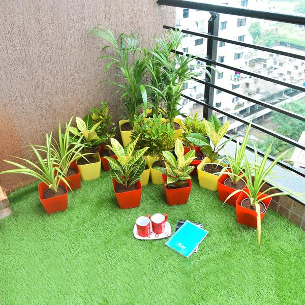 Attractive Foliage Plants for a Sunny Balcony Garden