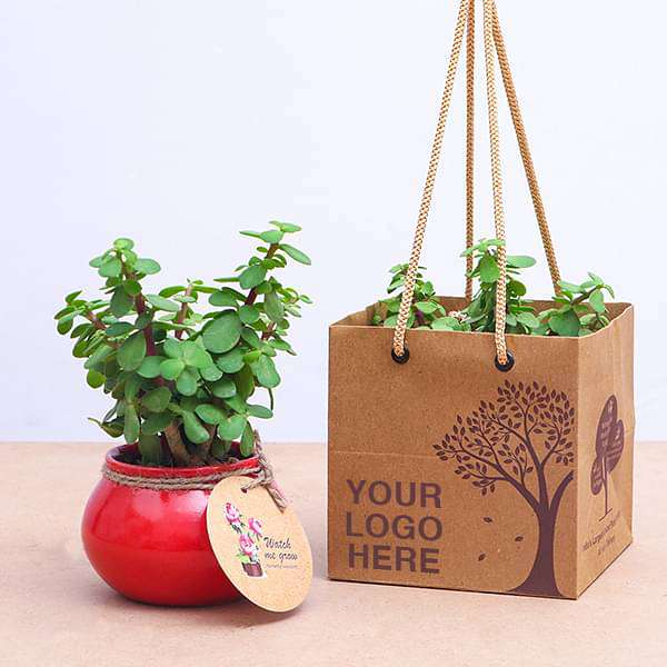 Elephant Bush, Jade Plant in Handi - Gift Pack (set of 30) - Nurserylive