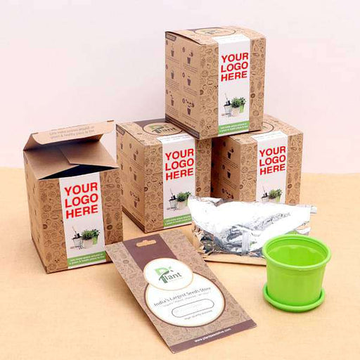 Healthy Coriander Seeds garden Kit - Gift Pack - Nurserylive