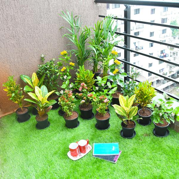 Celebrate Diwali with Flowering and Foliage Garden Plants