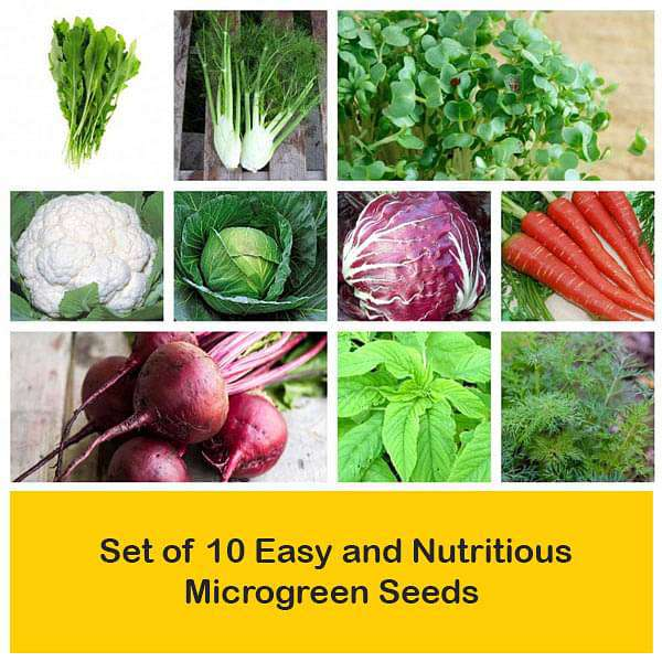 Set of 10 Easy and Nutritious Microgreen Seeds - Nurserylive
