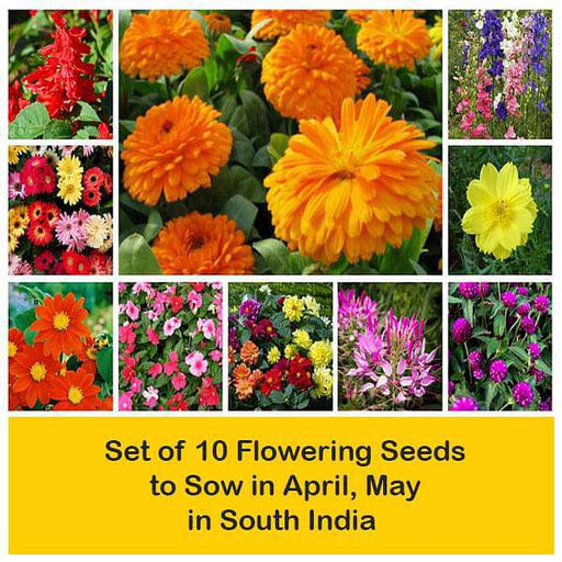 Set of 10 Flowering Seeds to Sow in April, May in South India - Nurserylive