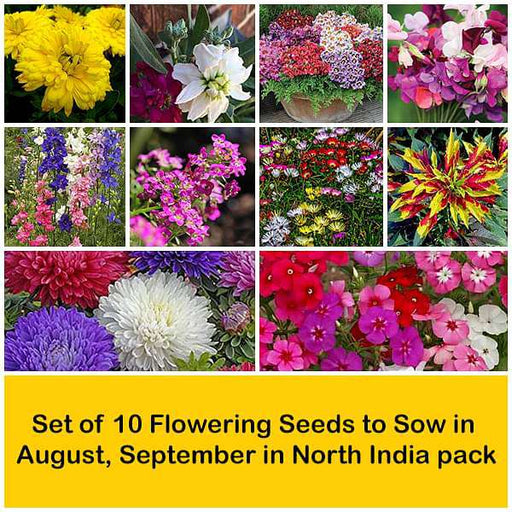 Set of 10 Flowering Seeds to Sow in August, September in North India - Nurserylive