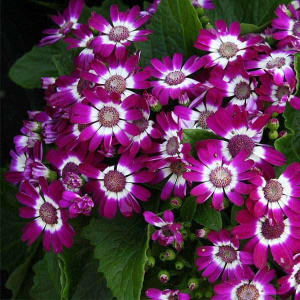 Set of 10 Flowering Seeds to Sow in December, January in North India