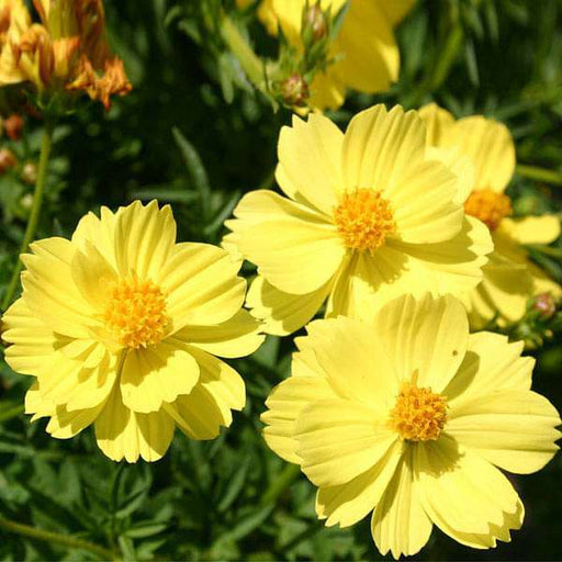 Set of 10 Flowering Seeds to Sow in February, March in North India - Nurserylive