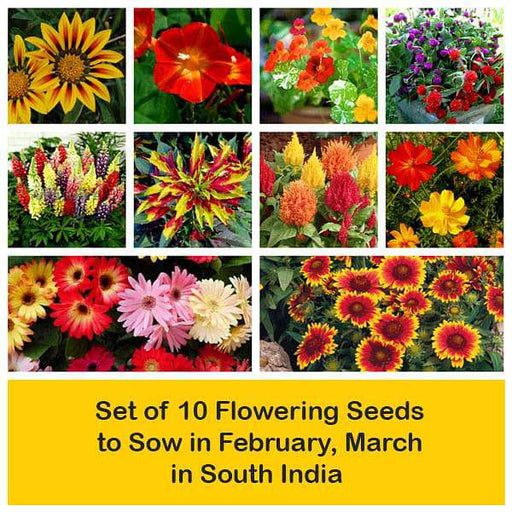 Set of 10 Flowering Seeds to Sow in February, March in South India - Nurserylive