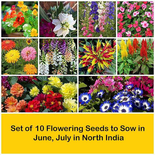 Set of 10 Flowering Seeds to Sow in June, July in North India - Nurserylive