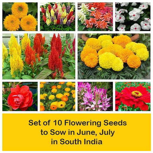 Set of 10 Flowering Seeds to Sow in June, July in South India - Nurserylive