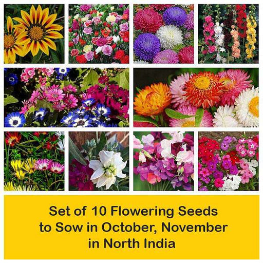 Set of 10 Flowering Seeds to Sow in October, November in North India - Nurserylive