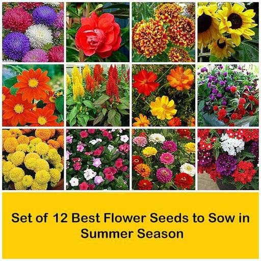 Set of 12 Best Flower Seeds to Sow in Summer Season - Nurserylive