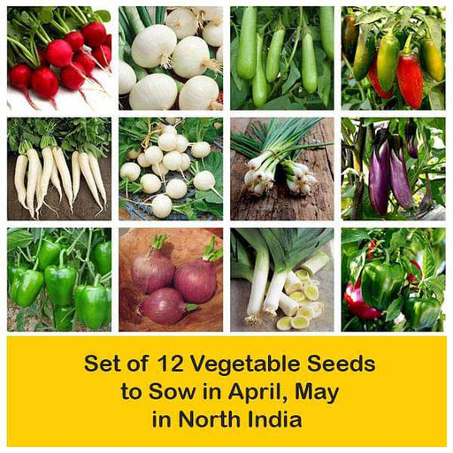 Set of 12 Vegetable Seeds to Sow in April, May in North India - Nurserylive