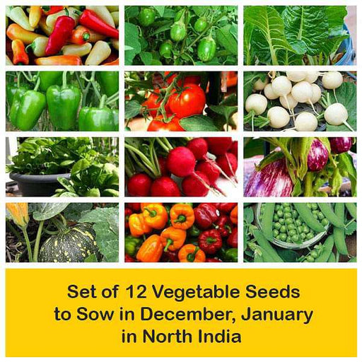 Set of 12 Vegetable Seeds to Sow in December, January in North India - Nurserylive