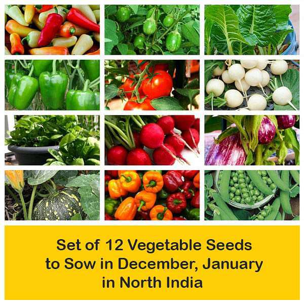 Set of 12 Vegetable Seeds to Sow in December, January in North India