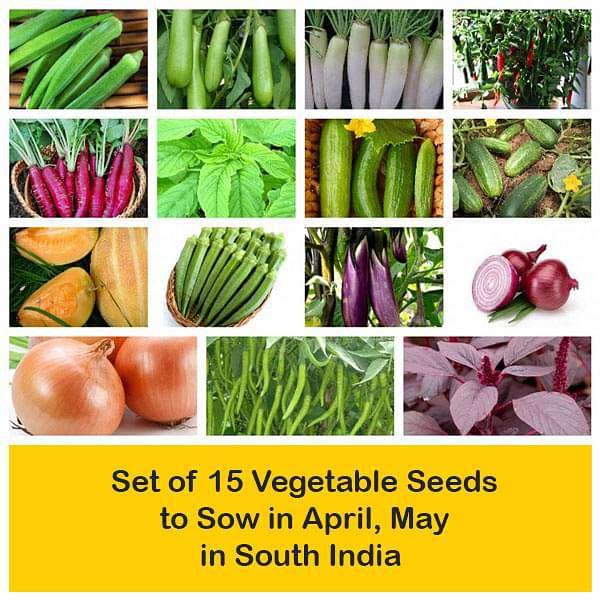 Set of 15 Vegetable Seeds to Sow in April, May in South India - Nurserylive