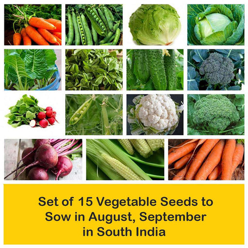 Set of 15 Vegetable Seeds to Sow in August, September in South India - Nurserylive
