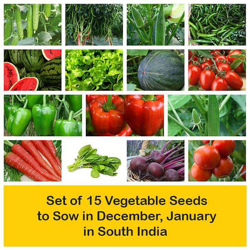 Set of 15 Vegetable Seeds to Sow in December, January in South India - Nurserylive